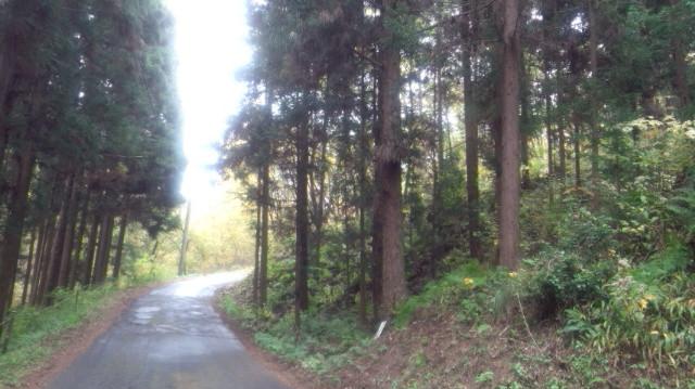 信州松茸山…